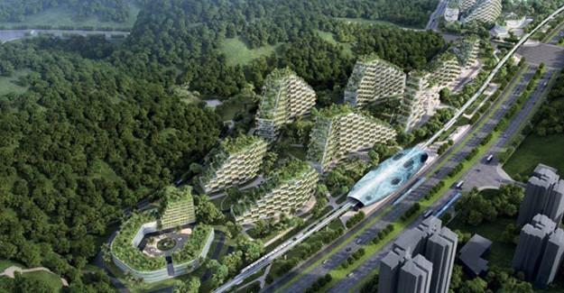 İlk orman kent kuruluyor!