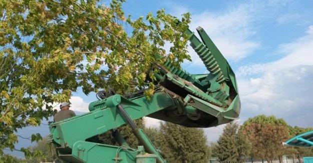 Ankara'da dört ayda 500 ağaç kurtarıldı!