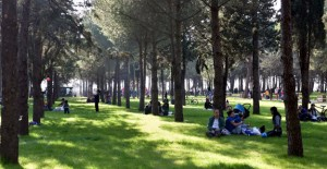 Kepez'de kişi başına 9 metrekare yeşil alan için hedefe az kaldı!