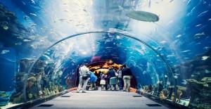 'Tünel Akvaryum' projesi içinTOKİtarafından belediyeye yer tahsis edildi!